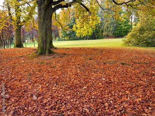 Keuken foto achterwand Rood traf. Autumn Landscape.