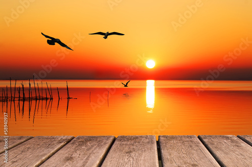 aves al amanecer en el mar
