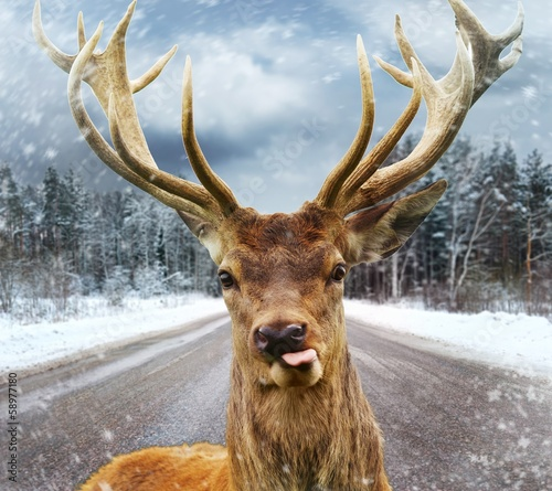 Deer with beautiful big horns on a winter country road Wall mural