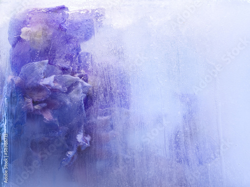 Background of   delphinium flower frozen in ice Fototapeta