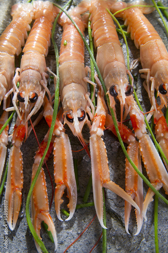 Photo  Fresh Shrimp