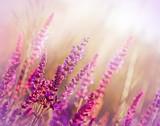 Dziki kwiat (kwiat łąki) - 58998785
