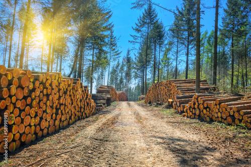 Fotografia  Log stacks along the forest road
