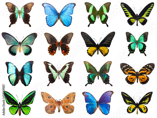 Poster Vlinder Tropical butterflies