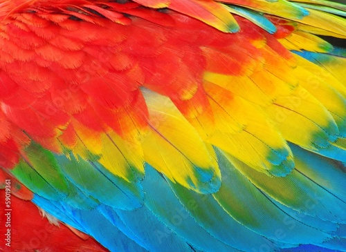 Fotobehang Papegaai Parrot feathers, red and blue exotic texture