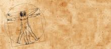 Vitruvian Man By Leonardo Da V...