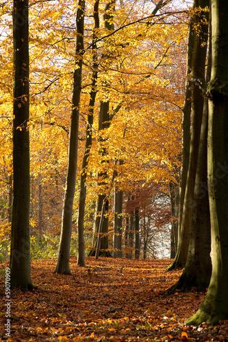 Cadres-photo bureau Foret brouillard Autumn Forest - 01