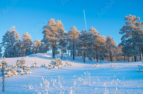 Foto op Aluminium Blauw Winter Landscape
