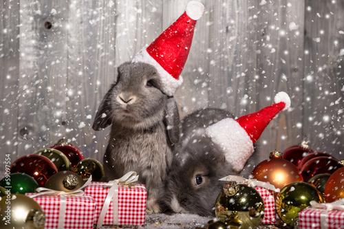 Foto op Plexiglas Kerstmis christmas rabbits