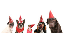 A Group Of Dogs With Party Hat...