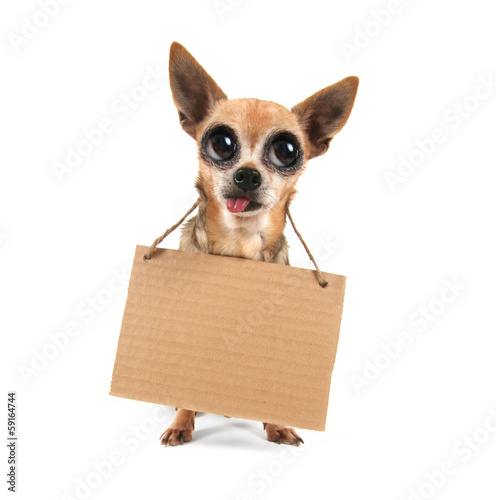 Photo  a goofy chihuahua holding a sign
