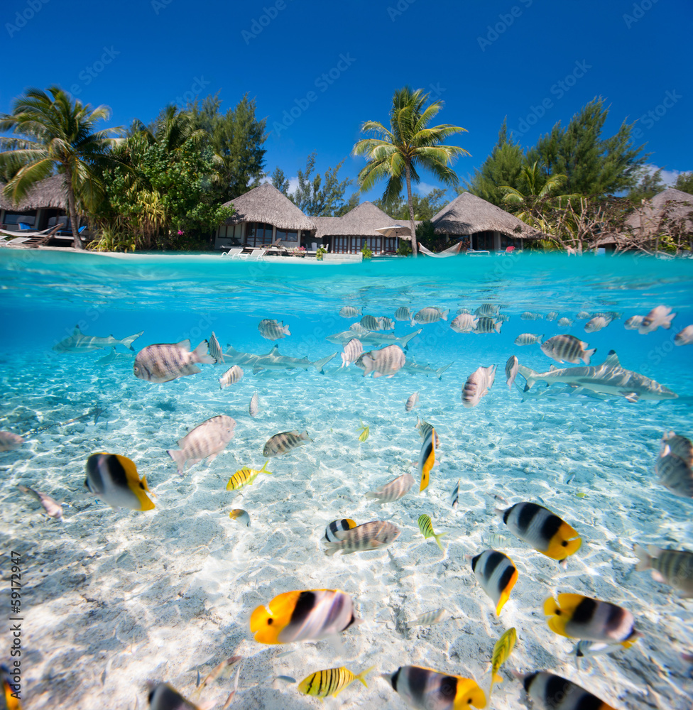 Fototapeta Tropical island under and above water