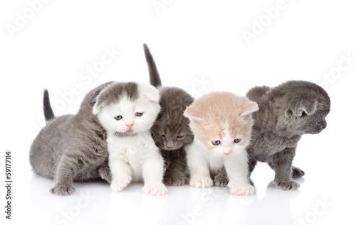 piec-kociat-brytyjskich-krotkowlose-samodzielnie-na-bialym-tle