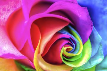 Rainbow Rose Macro