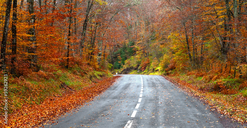 Fotobehang Diepbruine road in the forest in autumn, fall colors