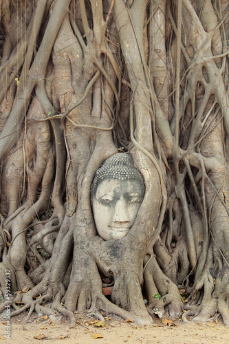 Photo Stands Place of worship Buddha Head Statue in Banyan Tree, Thailand
