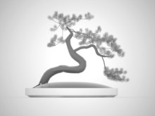 Black And White Bonsai