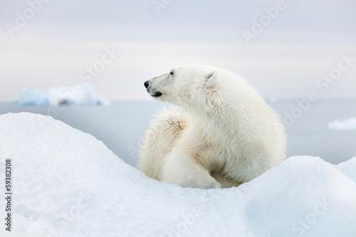 Wall Murals Polar bear Polar bear at Svalbard