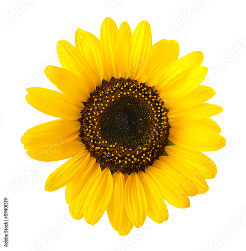 Keuken foto achterwand Zonnebloem sunflower