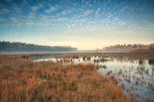 Misty Autumn Morning Over Swamp In Forest