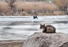 Cat On Winter Fishing