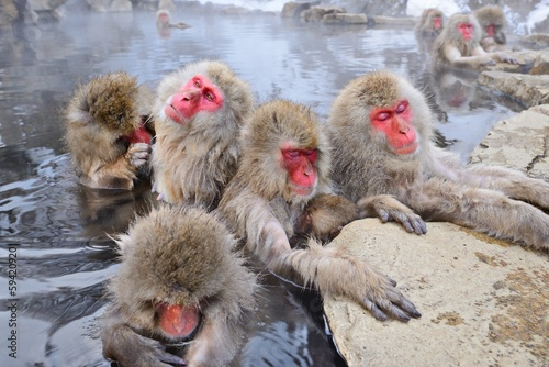 Foto op Plexiglas Aap Snow Monkeys bathing in Hot Springs in Nagano, Japan