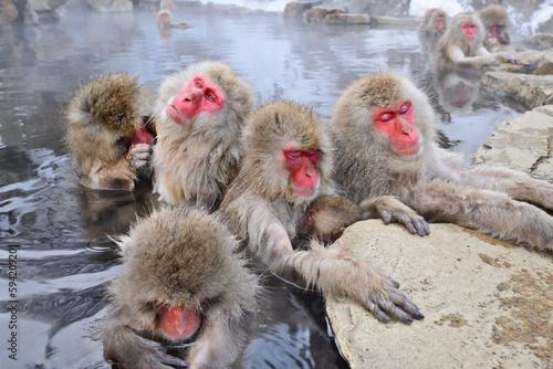 In de dag Aap Snow Monkeys bathing in Hot Springs in Nagano, Japan