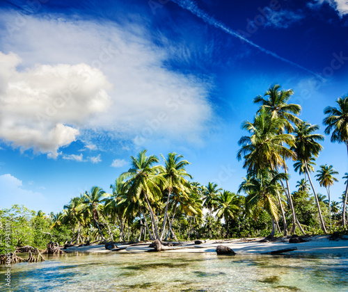 Foto-Kissen - Tropical beach with palms and mangroves (von doris oberfrank-list)