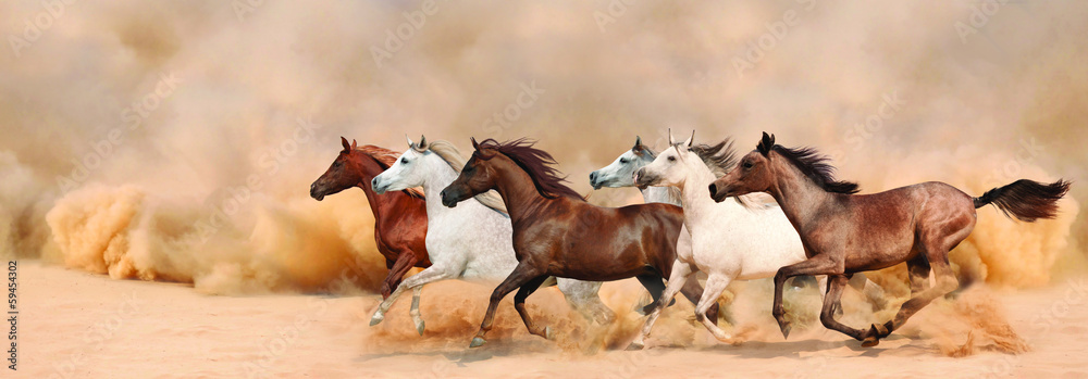 Fototapety, obrazy: Herd gallops in the sand storm