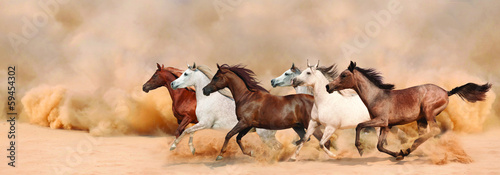 Fototapeta Herd gallops in the sand storm obraz