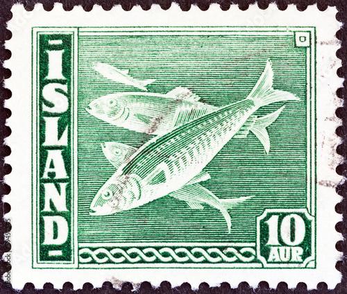 Fototapeta premium Atlantic herring (Clupea harengus) fish (Iceland 1939)