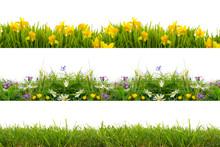Freisteller Wiese Rasen Blumen