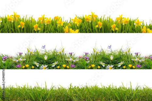 Poster de jardin Narcisse freisteller wiese rasen blumen