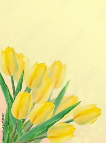 Foto op Canvas Bloemen Postcard with fresh flowers tulips and empty place for your te