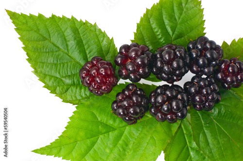 Fotografija  fresh blackberries with leaves on white