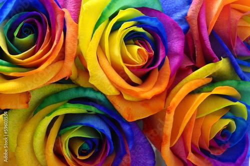 rainbow-rose-lub-szczesliwy-kwiat