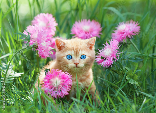 Obraz Cute little kitten sitting in rose flower meadow - fototapety do salonu