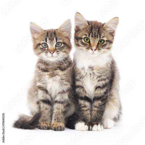Two small kittens Poster