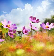 Obraz na Szkle Do sypialni Field of flowers