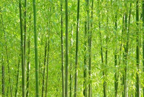 Naklejka premium Zielony bambusowy las