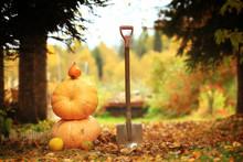 Autumn Harvest Of Pumpkins Halloween