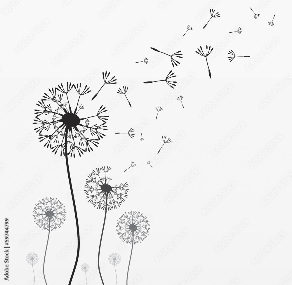 Fototapety, obrazy: Seven vector dandelions