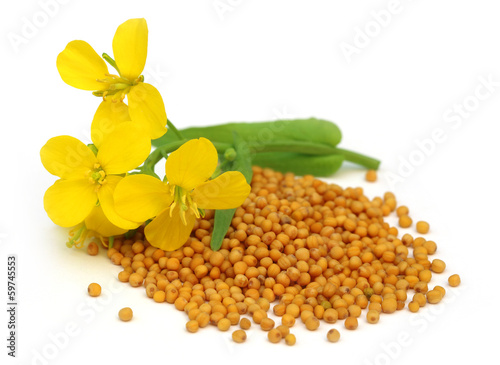Photo  Mustard flower with seeds