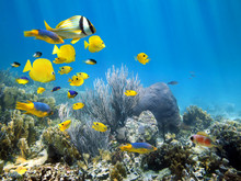 Underwater Coral Reef With Sch...