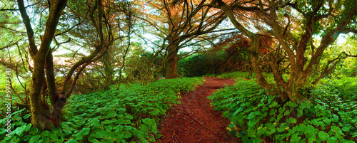 Foto op Aluminium Groene Adventure Path Through The Wilderness