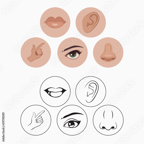 Foto  five senses, nose lips eye ear and hand