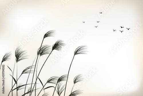 Fototapeta reed painting