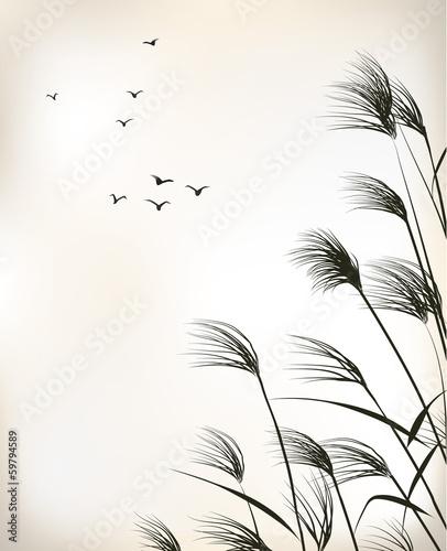 Obraz na plátně reed painting
