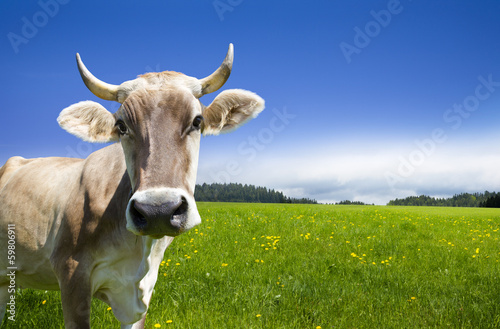 Deurstickers Koe Kuh auf der Alm