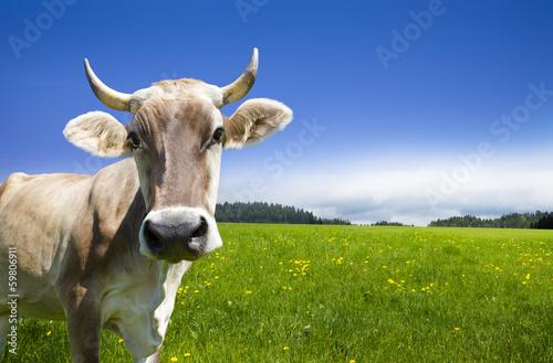 Foto op Aluminium Koe Kuh auf der Alm
